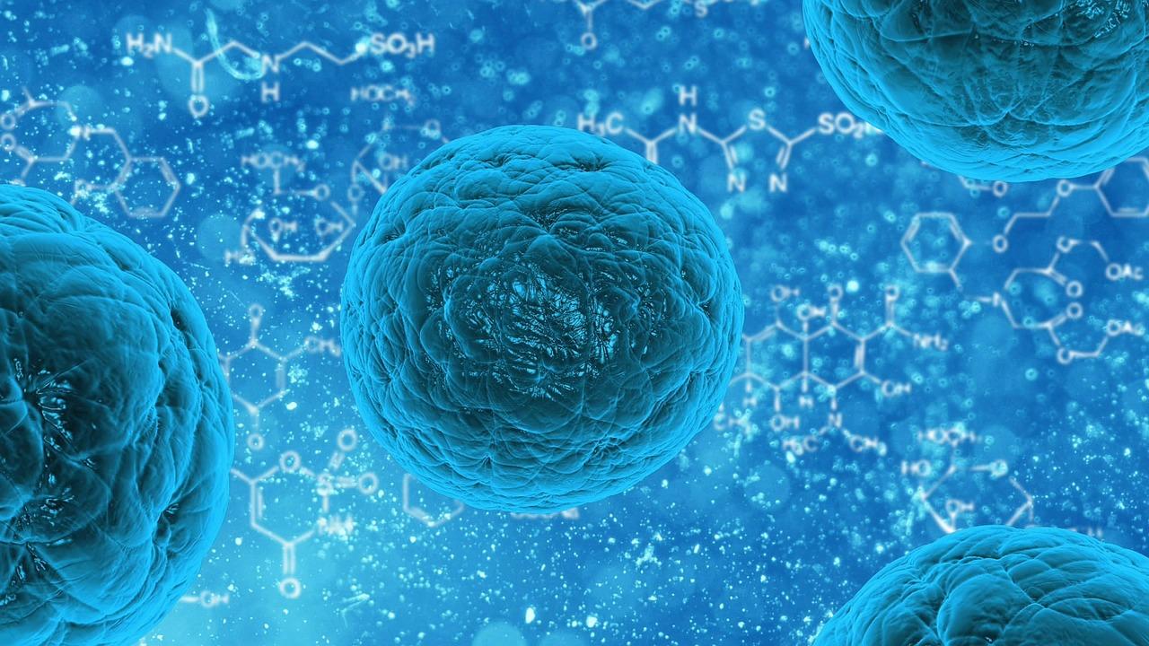 Kapusta je účinná v boji proti rakovine