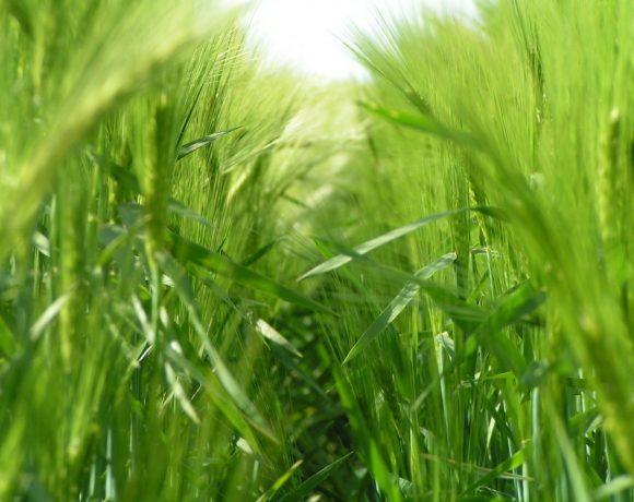 Čo sa deje s telom po mesiaci užívania zelených potravín?